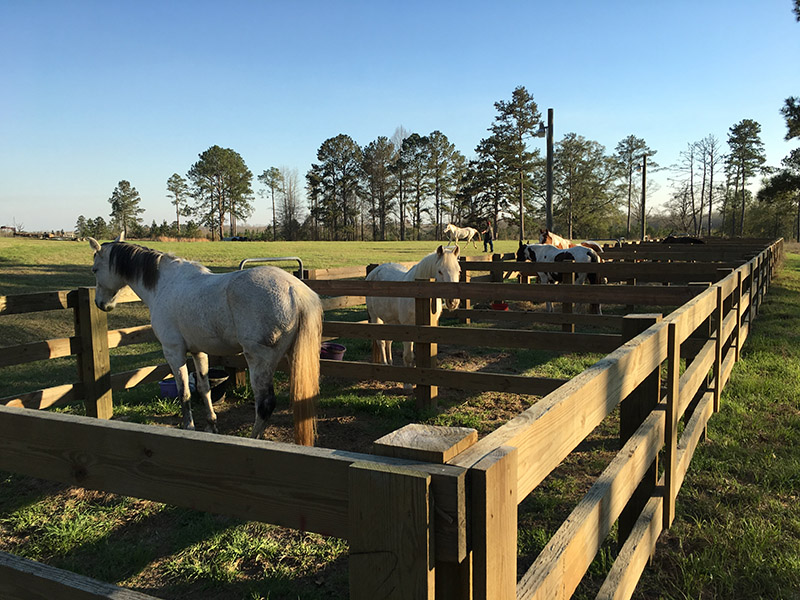 horses in paddock at Wehle