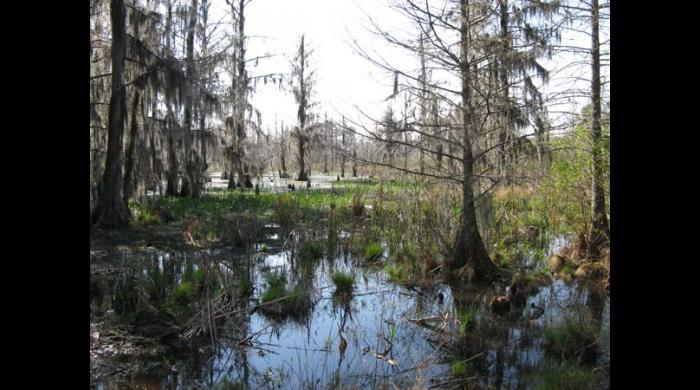 Wetland on the Riggins Tract Addition
