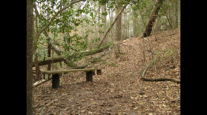 Trail and bench on the Pocosin Tract