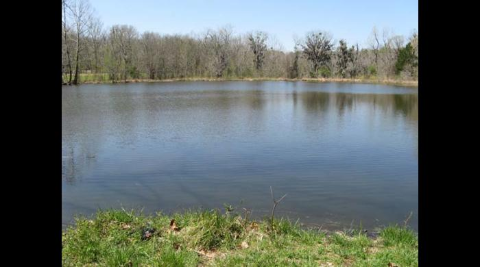 Pond on the Riggins Tract Addition to the Lowndes WMA