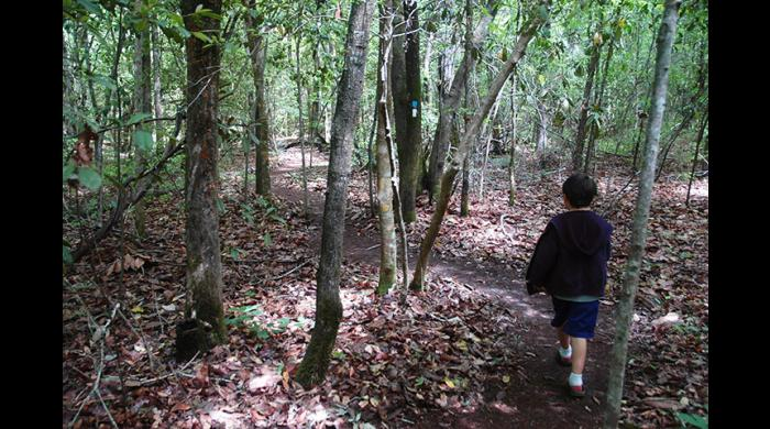 The trail offers an easy to slightly moderate hike through southeast Alabama forest.