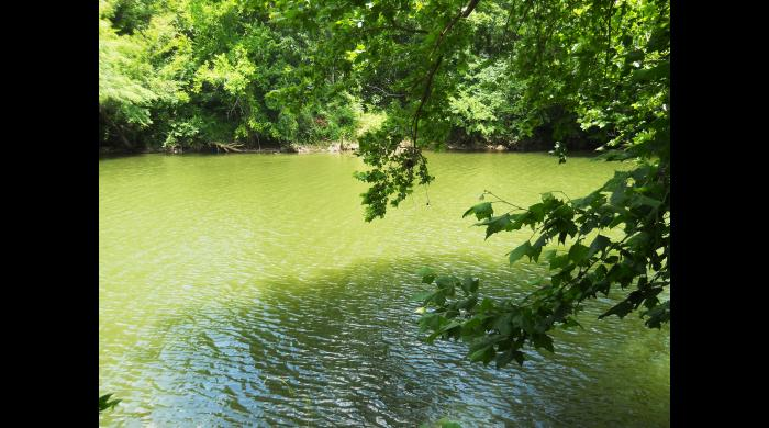 A view of the Cahaba River